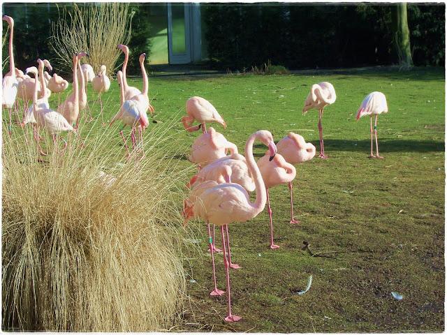 Aves no zoo de Rotterdam - novocaroneiro.com
