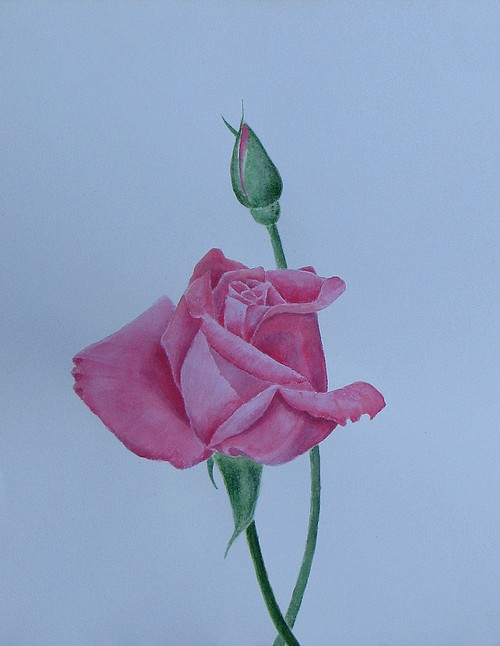 Roses Study by Biju P, Indian artist