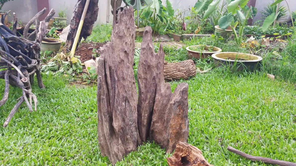 Aquascape Driftwood For Sale In KL, Selangor, Klang Valley In Malaysia