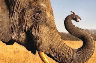 http://3.bp.blogspot.com/--XQmUF7knJU/UUffHtxSv6I/AAAAAAAALbM/LYhOuPDDPHg/s1600/elephant-mouse.jpg