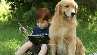 Hermosos perros Golden retriver esta raza de perros, se han convertido rápidamente en uno de los perros más populares de América