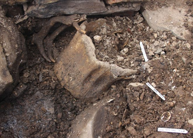 Human remains found at Iron Age site in Orkney