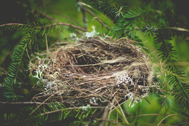 Picture of an empty nest