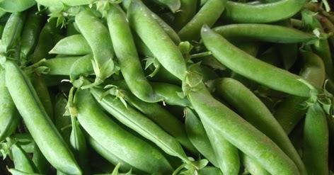 Disfrutar con el huerto y el jard n siembra y cultivo de for Siembra de habas y guisantes