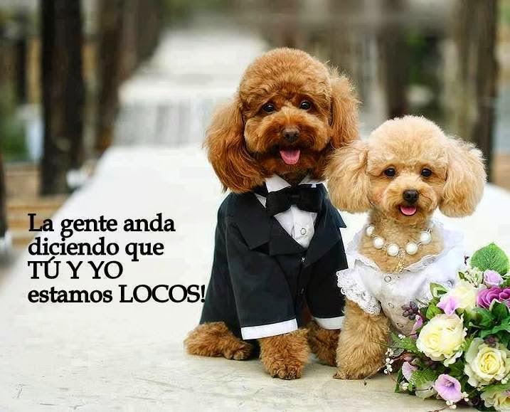 Imagenes Lindas De Amor Para Dedicar Imagenes De Amor Para Descargar