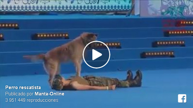 Un perro salva vidas haciendo la reanimación cardiopulmonar