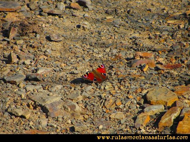 Ruta peña Manteca o Horru: Mariposa en el camino