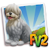 Fv 2 Old English Sheepdog Puppy  (baby ,adult )