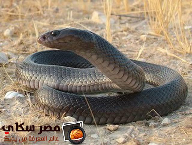كيف تتأقلم الثعابين المائية فى الشتاء والربيع وموسم التزاوج water Snakes ؟