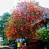 Un domingo en Yakarta, la ciudad de la eterna primavera