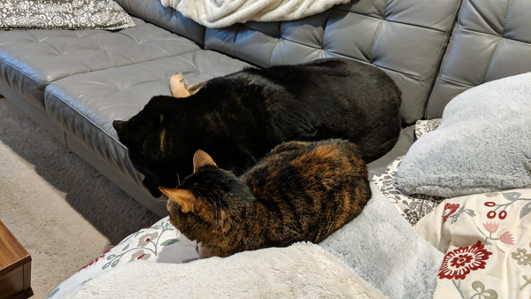 image of Zelda the Black and Tan Mutt napping on the couch; Sophie is lying behind her