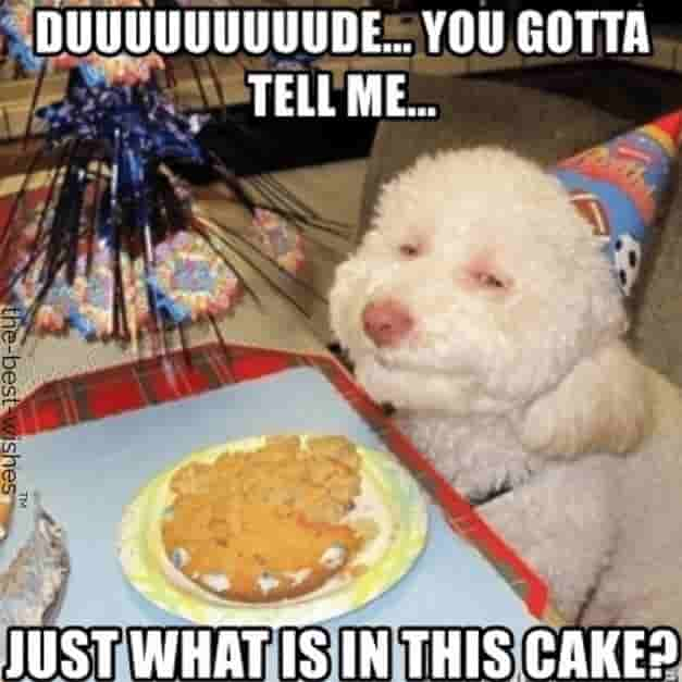 hilarious dog memes for birthday