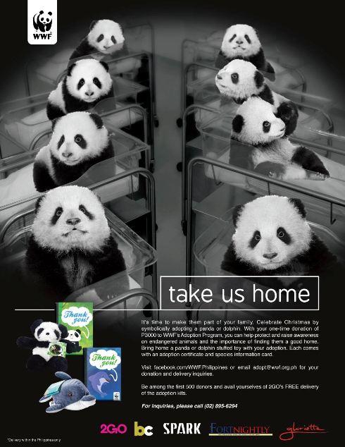 Good News Manila Wwfs Adoption Program Bring Home A Panda A