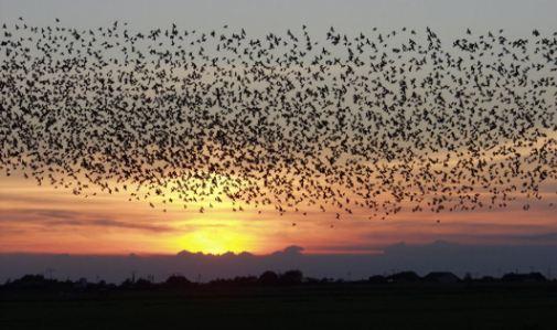 download suara burung walet asli