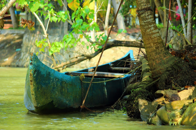 Poovar, neeyar, coconut, backwater, Kovalam, Kerala, boating