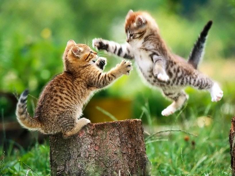 asal usul kucing kucing terbaru dari mesir