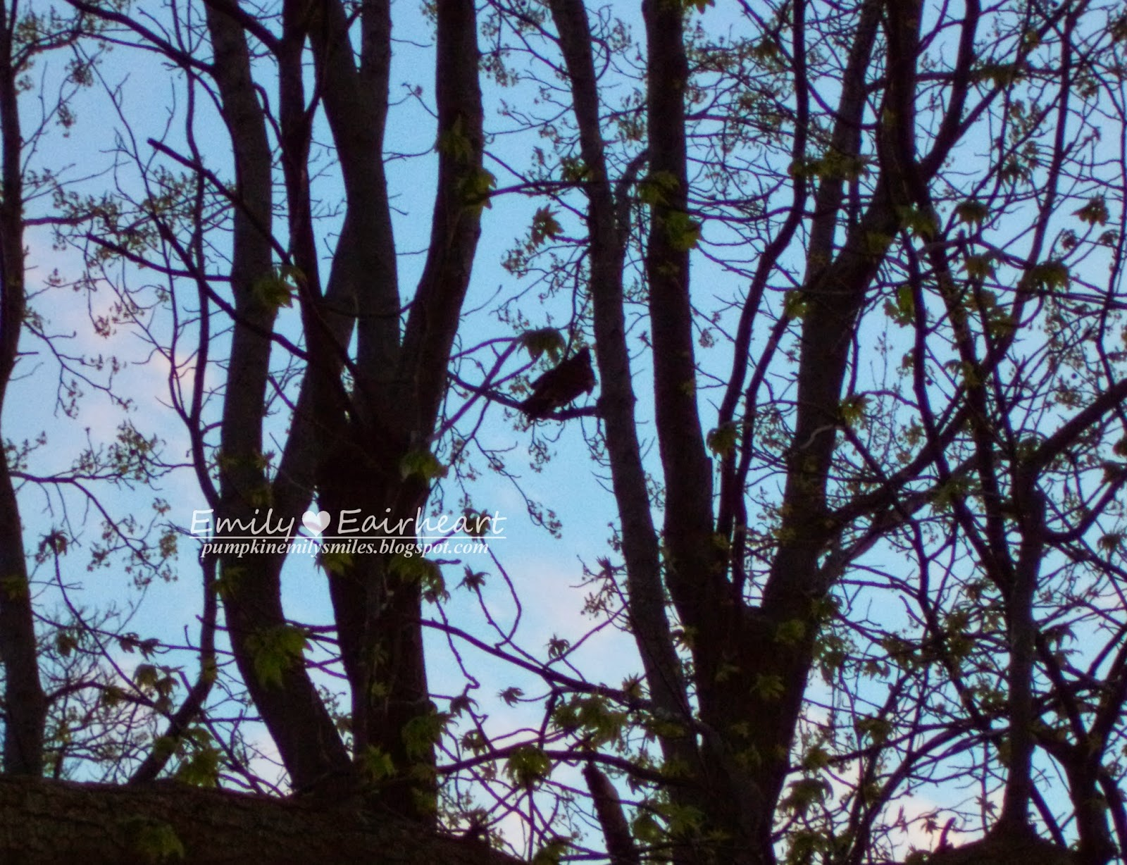 A buzzard sitting in the trees