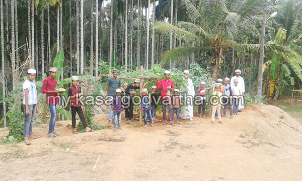 Kerala, News, Madrasa, Kasargod, Kumbadaje, Agriculture farming by Madrasa students.