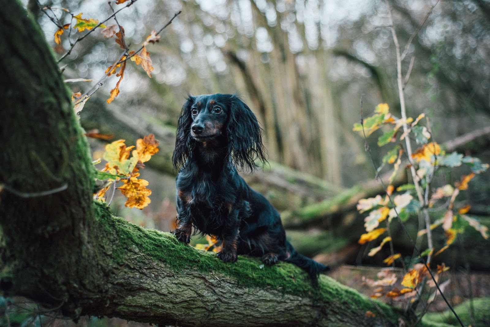 dachshund cocker spaniel on leafy tree liquidgrain liquid grain