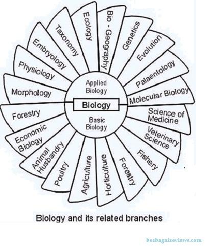 Cabang Cabang Ilmu Biologi dan Penjelasannya Lengkap - berbagaireviews.com