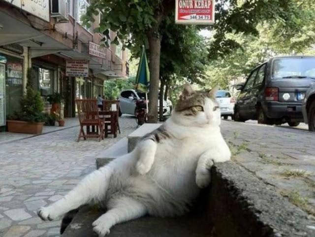 Tombili, el gato que pasó de ser un meme a tener una estatua