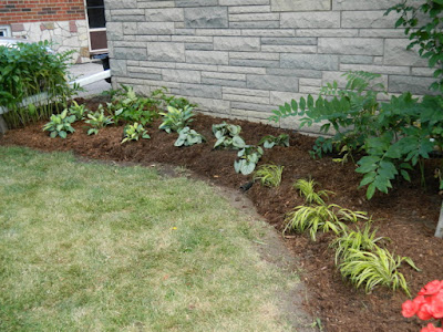 Dorset Park Scarborough front yard garden makeover after Paul Jung Gardening Services Toronto