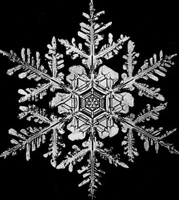 snowflake - photo #48