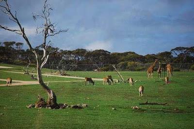 Kebun Binatang Monarto