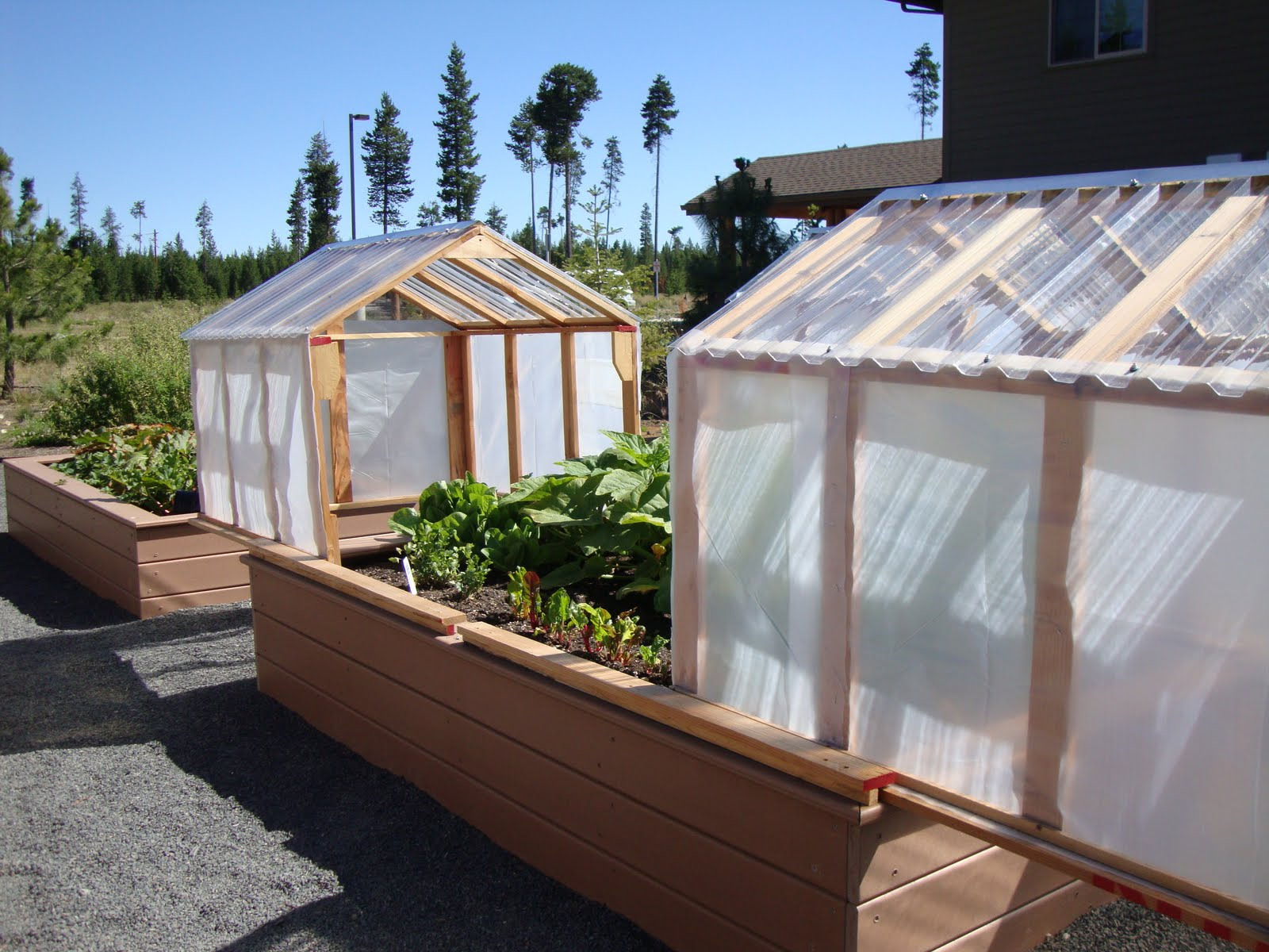 danger garden: Mini-greenhouses or raised beds? Both!