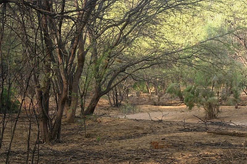 Resultado de imagen para bosque seco de pariñas