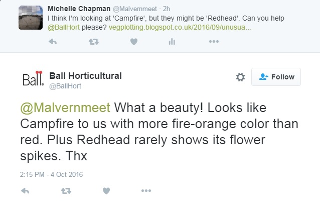 Ball Colegrave Plant ID conversation on Twitter