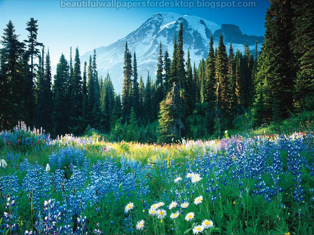 Labels: Beautiful Desktop Nature Wallpapers