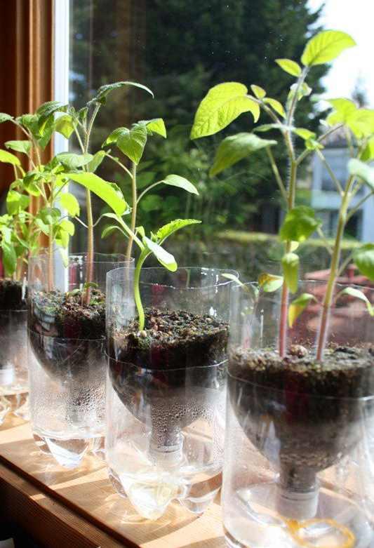 Tempat pot tanaman dari botol plastik