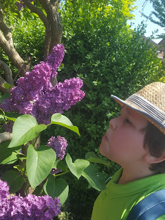 Dan Jon taking some time out to smell the flowers on a neighbours tree