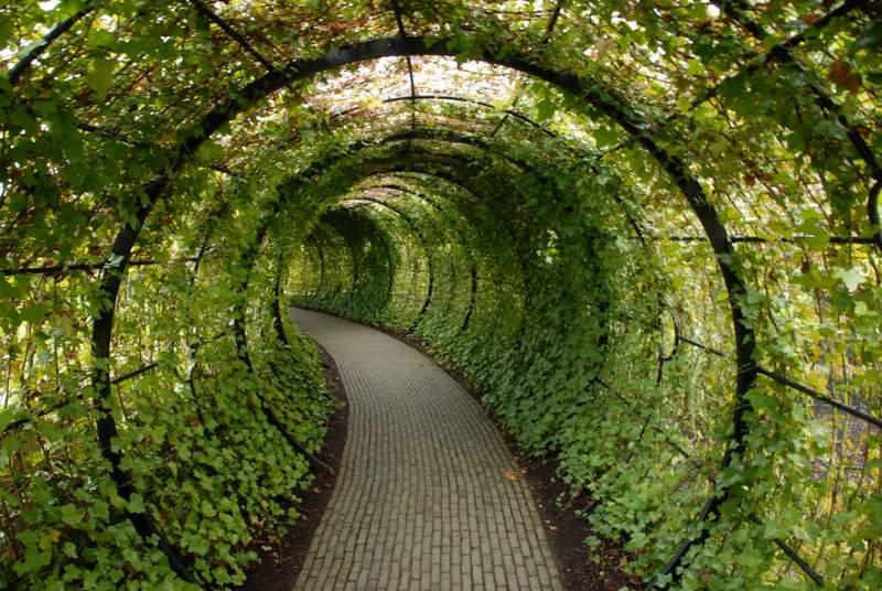 Los jardines venenosos de alnwick garden inglaterra for Plantas de un jardin botanico