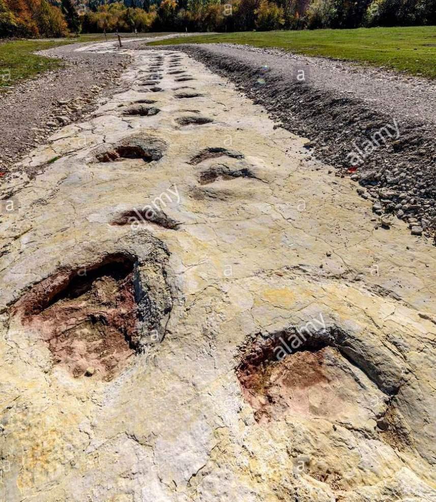 Sauropod Tracks 35-metre Sauropod Crea...