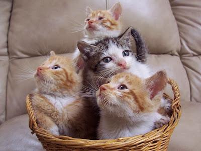 Children-Cats