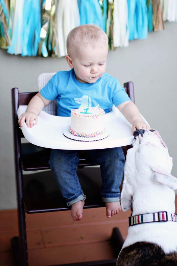 First birthday cake smash - sharing with the dog