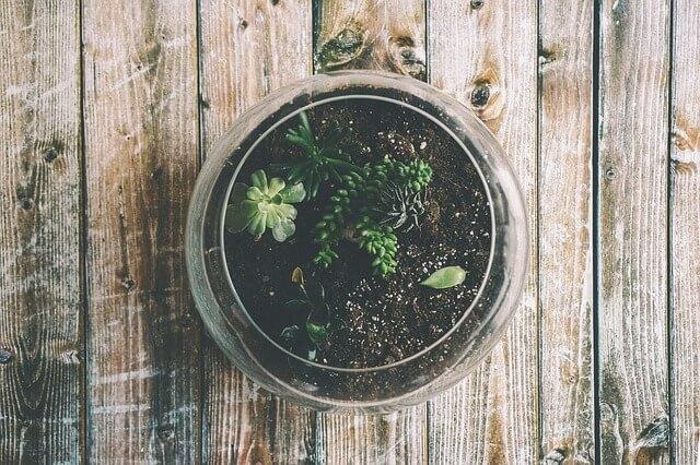 Abono orgánico es un excelente sustrato para tus plantas