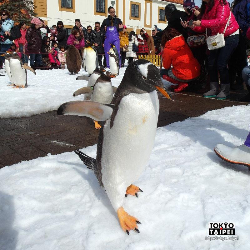 【登別尼克斯海洋公園】歐風城堡水族館 全年都有企鵝遊行