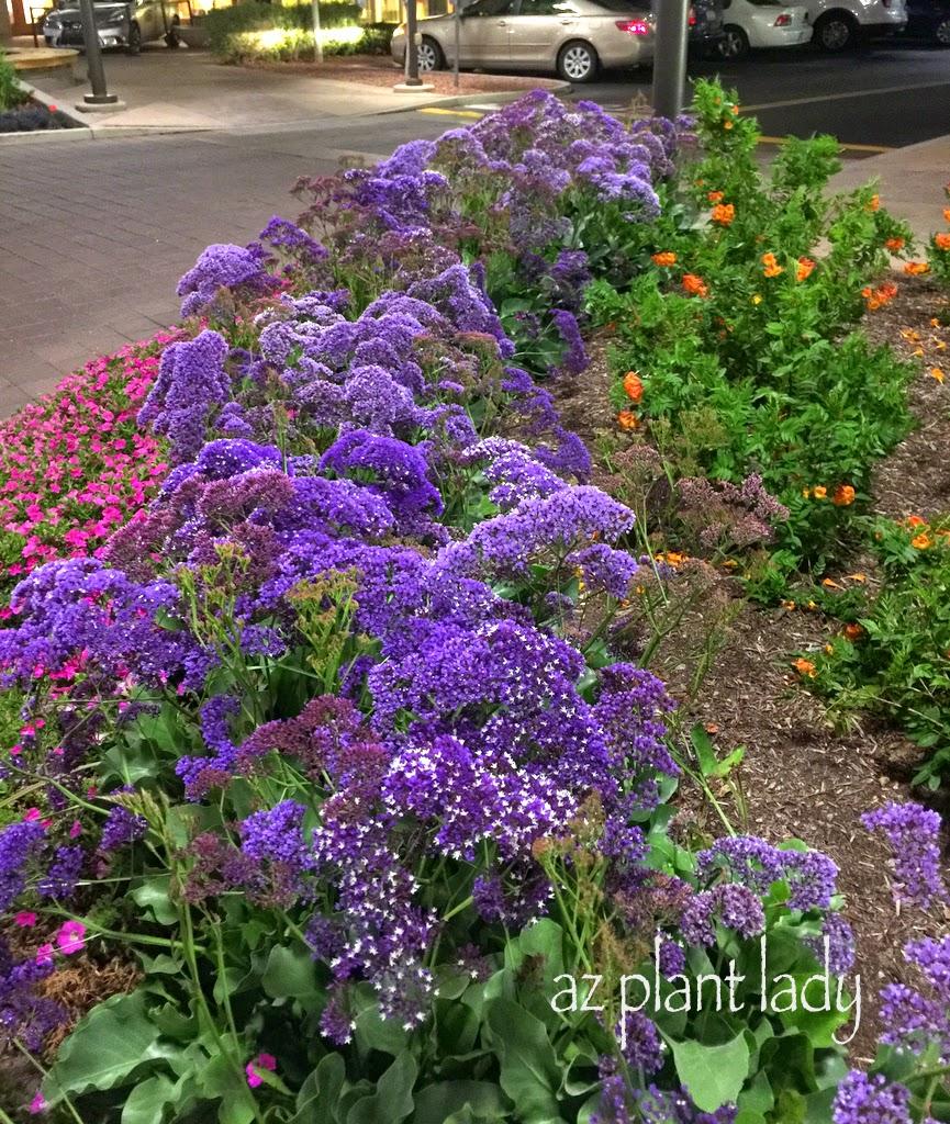 Ramblings From A Desert Garden Week In Review
