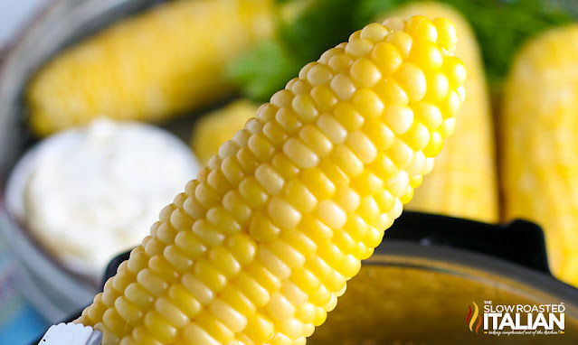 close up photo of perfectly steamed ear of corn
