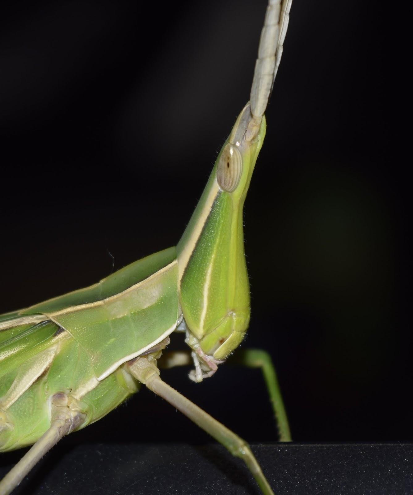 磐城蘭土紀行: 虫の顔