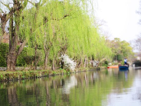 柳川の雛祭り