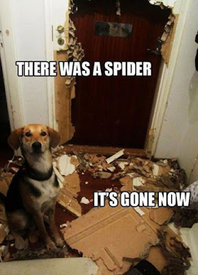Dog Humor : There was a spider