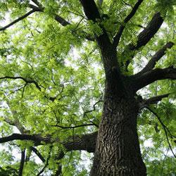 PLANTING NEAR A WALNUT TREE | GARDENING TIME