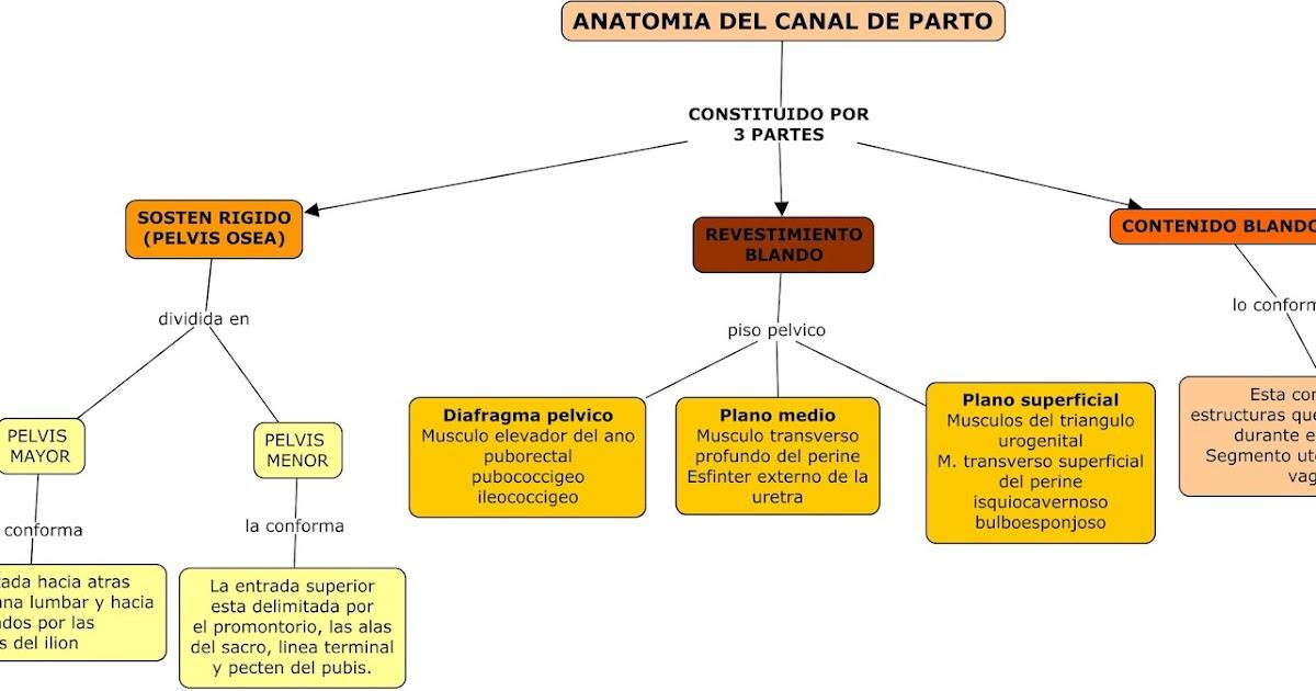 Jorge Luis Samaniego Lopez Gineco UAS 2017: ANATOMÍA DEL CANAL DE PARTO