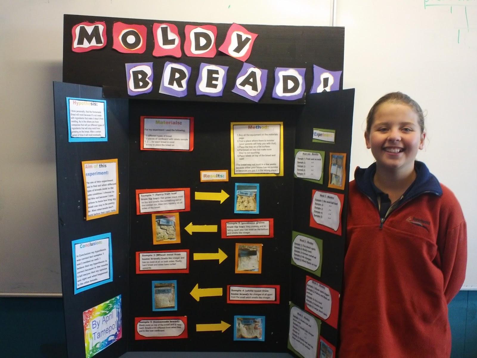 Moldy bread science fair project