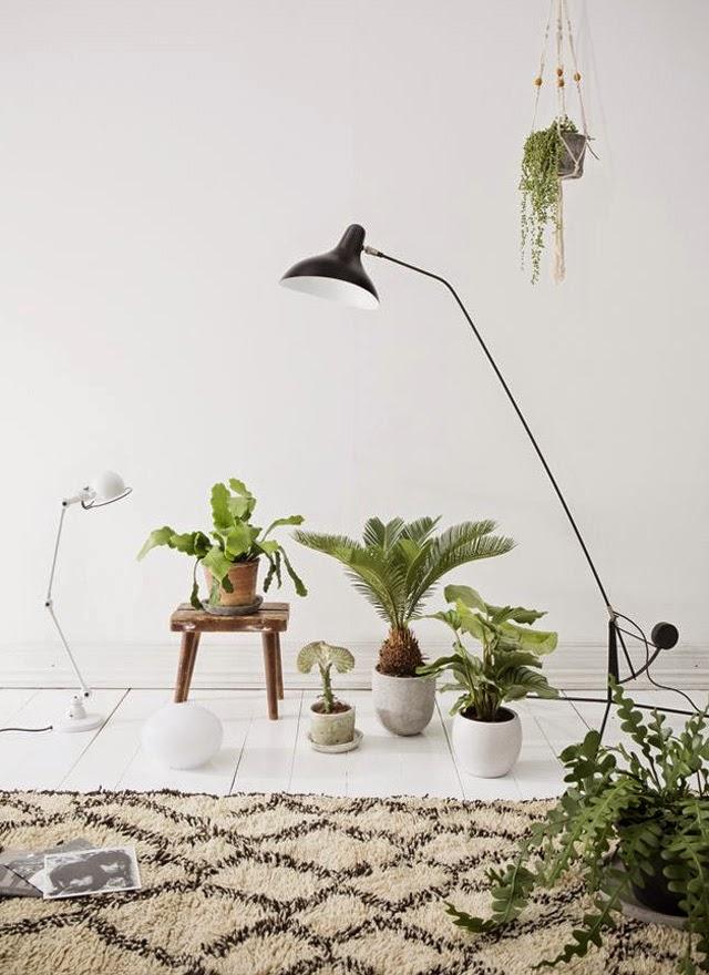 deco scandinave - coin plantes