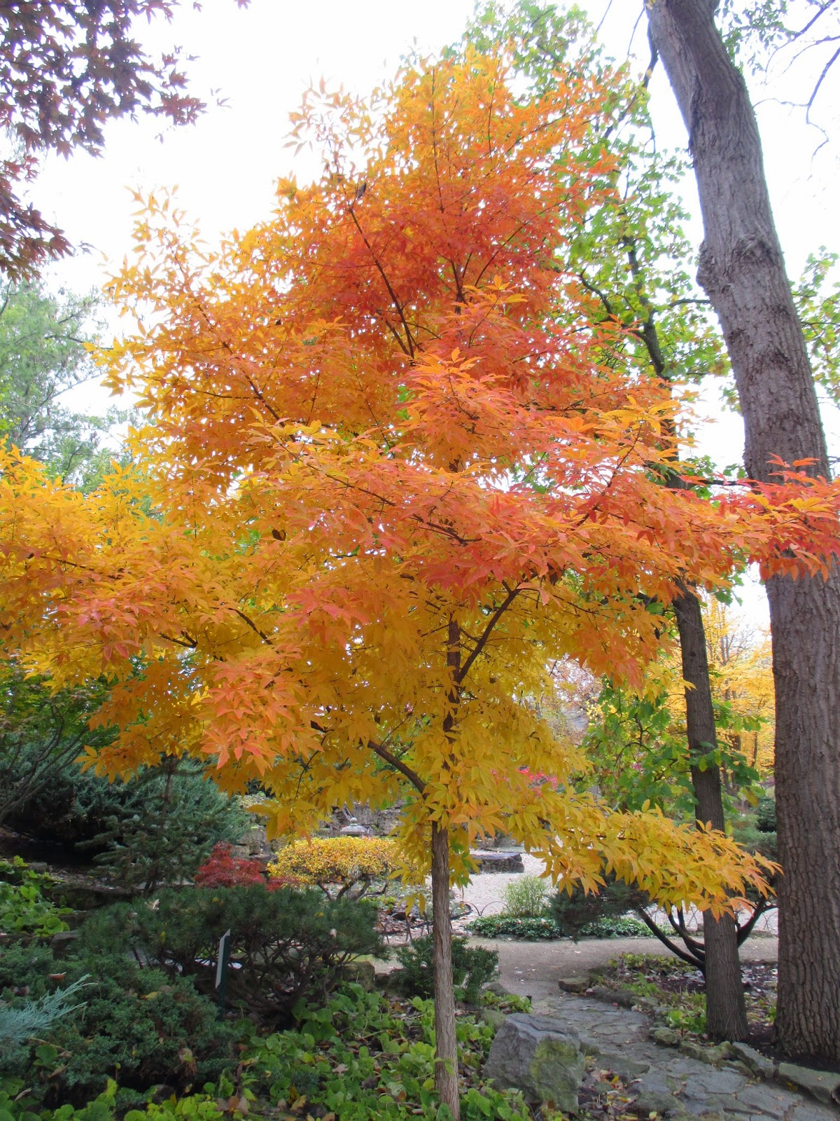 Rotary Botanical Gardens Hort Blog Super Fall Color